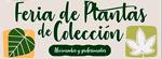 Feria de Plantas de Colección