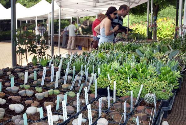 V Feria de Cactus y otras plantas de colección.