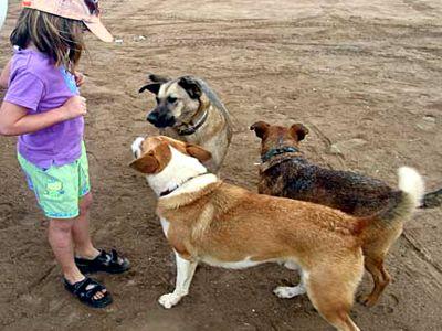 Sanciones por incumplimiento de Normas sobre animales