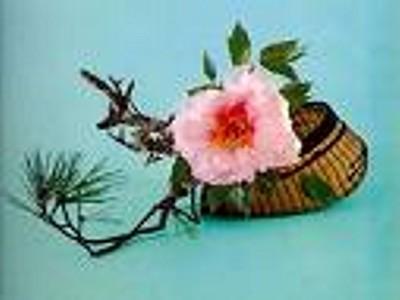 Exposición floral