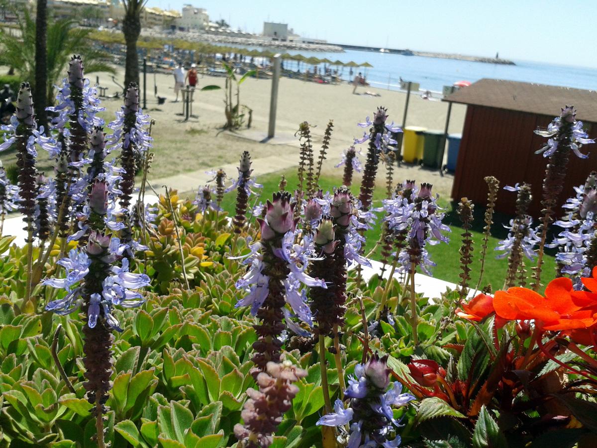 Playa Malapesquera - Flores - Benalmádena Costa