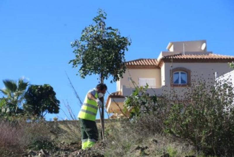 El Ayuntamiento ultima la plantación de 250 árboles en los terrenos del futuro Parque Al-Baytar