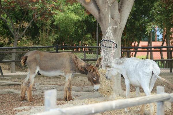 El Parque de la Paloma acoge dos ejemplares de burro de raza andaluza para contribuir a la conservación de esta especie.