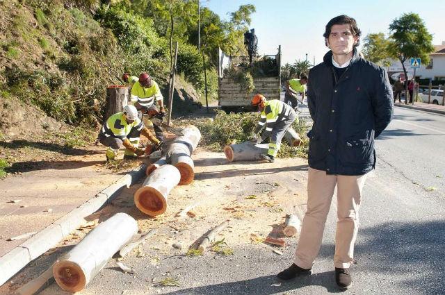 El Ayuntamiento acomete la tala de dos eucaliptos en la avenida Arroyo Hondo