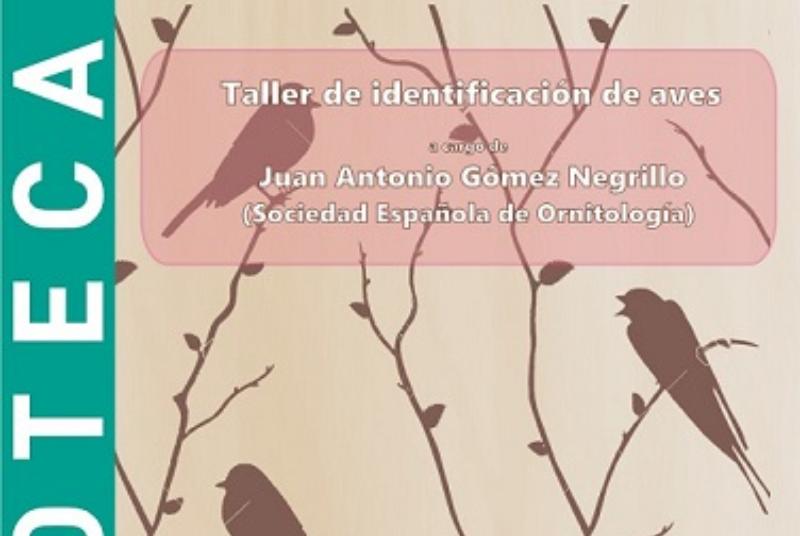 TALLER DE IDENTIFICACIÓN DE AVES, POR JUAN ANTONIO GÓMEZ NEGRILLO