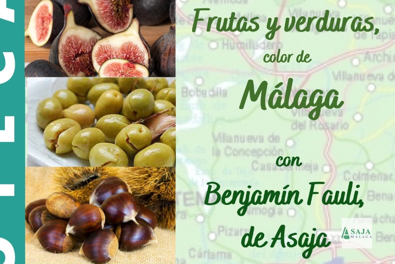 FRUTAS Y VERDURAS, COLOR DE MÁLAGA